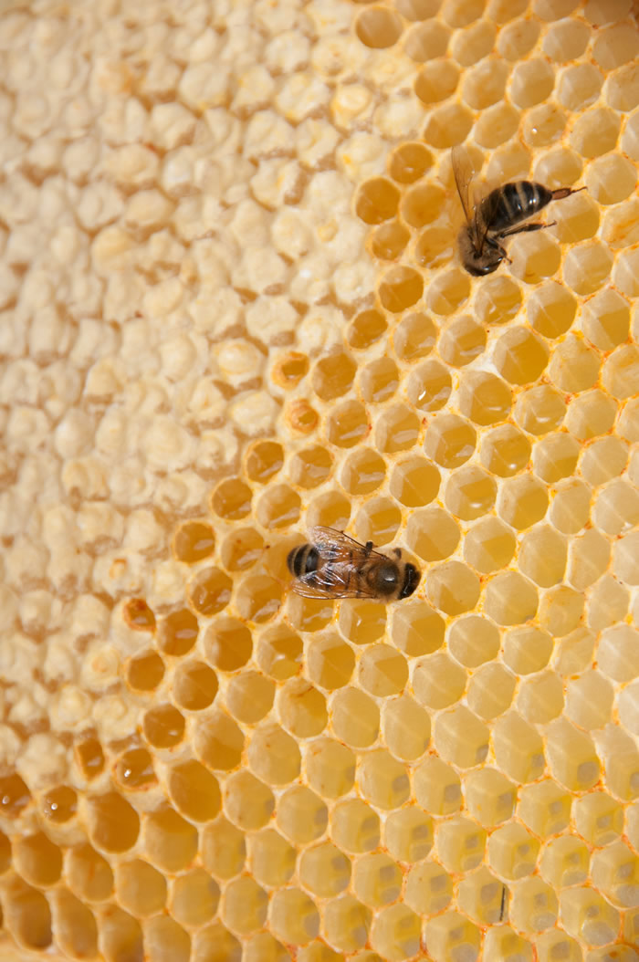 Capped and Uncapped Honey in the Comb