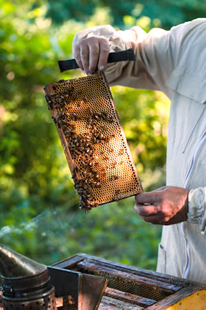 The Beekeeping Year Begins With a Hive Inspection