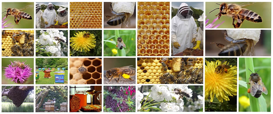 The Beekeeping Year Collage
